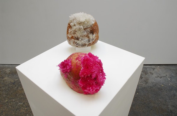 SOOKOON ANG, YOUR LOVE IS LIKE A CHUNK OF GOLD (coral, proenneke), 2013 Bread, monoammonium phosphate